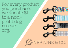 Advertisement - Neptune & Co. - https://neptunenco.com