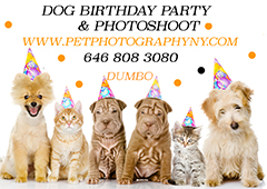 Advertisement - Pet Photography New York - http://www.petphototographyny.com