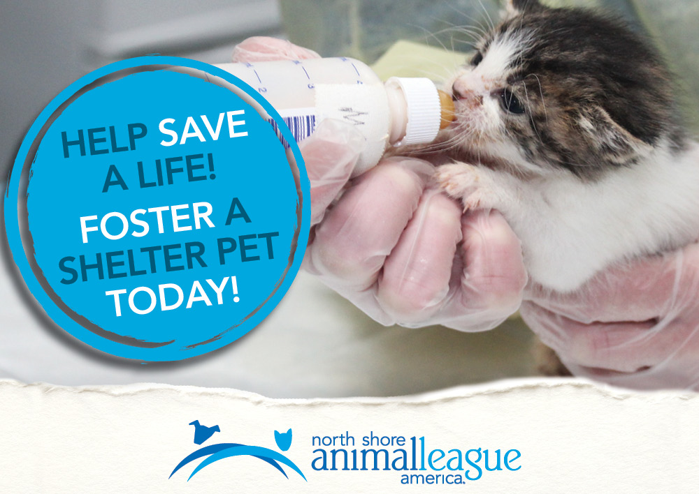Advertisement - NSALA - http://www.animalleague.org/foster